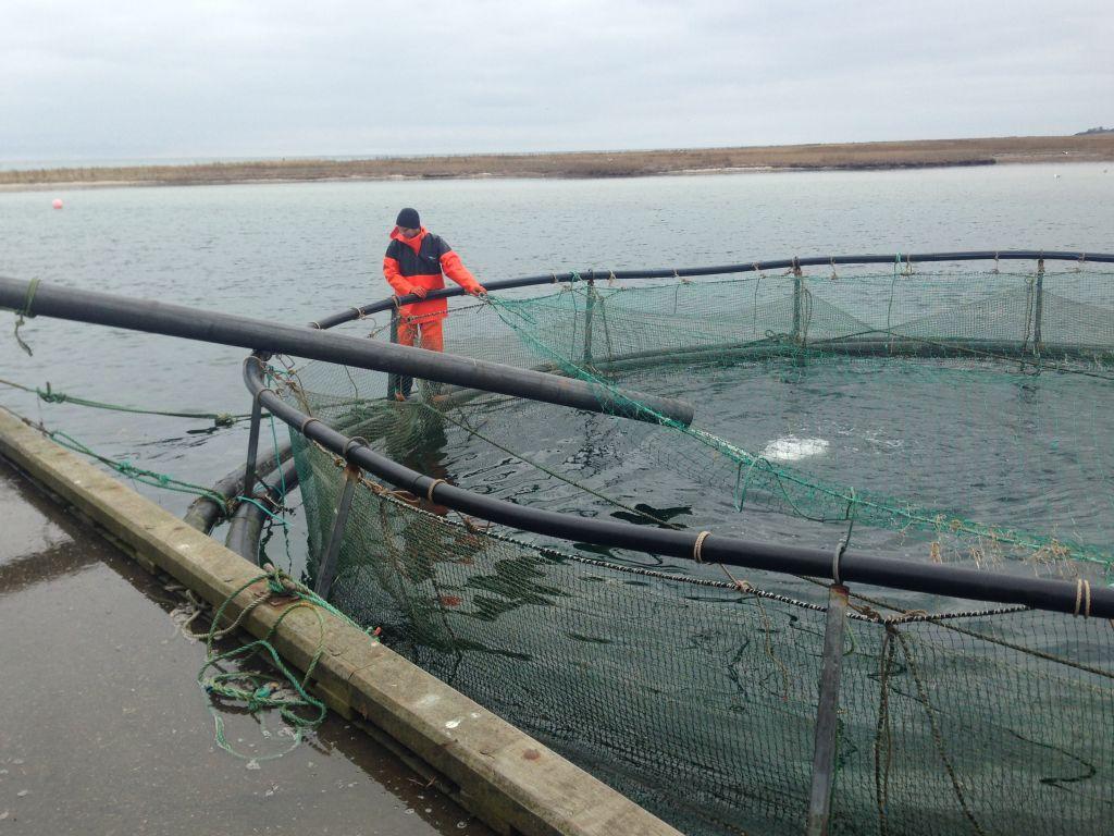 Fiskedelikatesser - image CD214340-7342-45BC-A4FC-F978A76481B5-fiskedelikatesser on https://www.vildmedvand.dk
